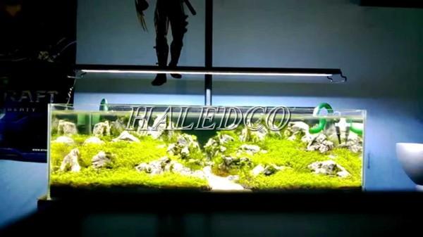Thiết kế đèn chiếu sáng hồ thủy sinh