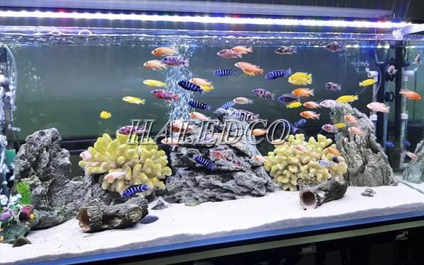 Đèn led dây dưới nước chiếu sáng cho hồ cá