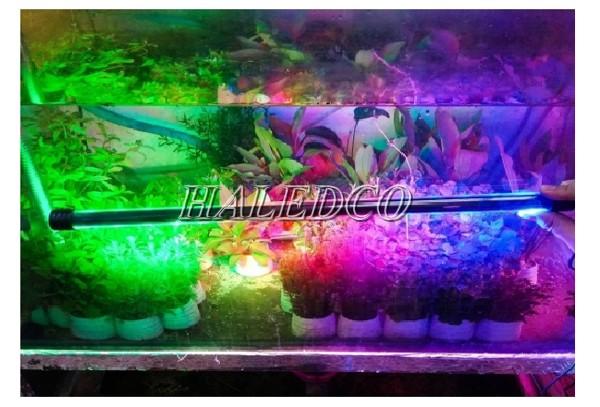 Chọn màu sắc ánh sáng cho bể thủy sinh