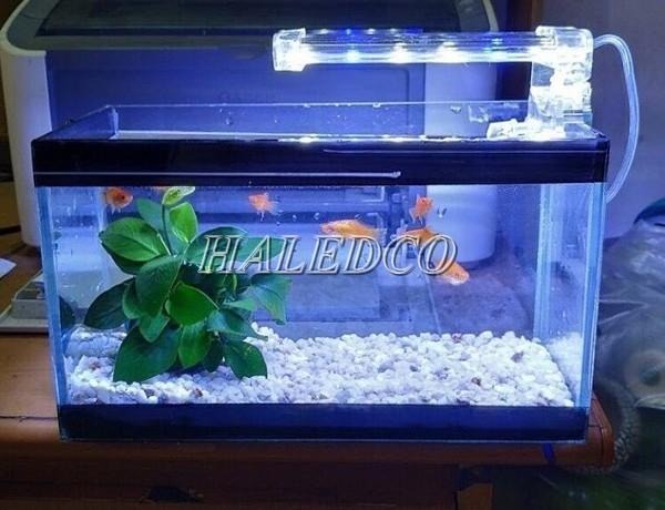 Bể cá sử dụng đèn led 60cm để chiếu sáng