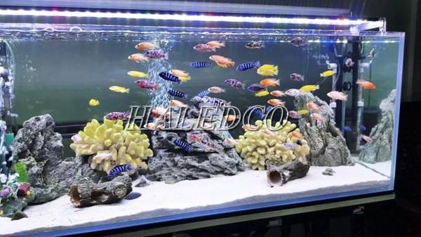 Đèn led dây trang trí bể cá