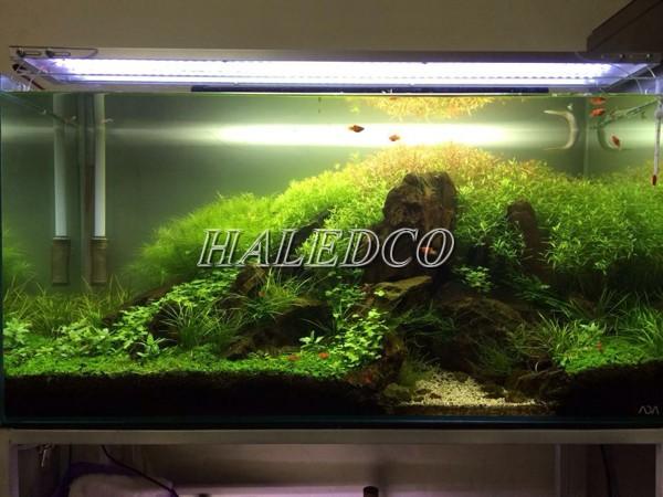 Đèn led 1m ứng dụng lắp đặt chiếu sáng hồ cá